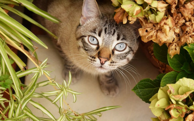 image for Pets and Houseplants
